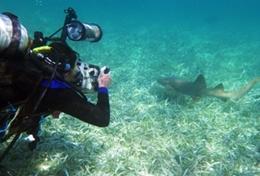Leer duiken tijdens deze groepsreis voor jongeren naar Belize.