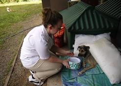 Vrijwilligerswerk in Belize: Diergeneeskunde & Dierenverzorging