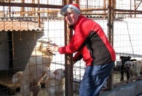 Vrijwilligerswerk in Roemenië: Diergeneeskunde & Dierenverzorging