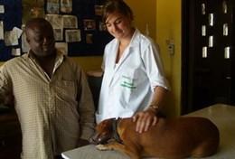 Vrijwilligerswerk in Ghana: Diergeneeskunde & Dierenverzorging