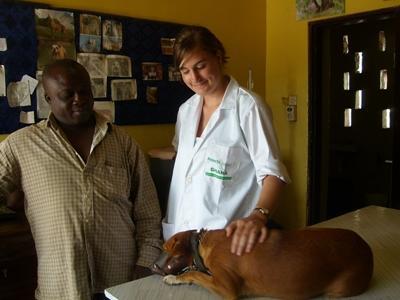 vrijwilligerswerk diergeneeskunde in Ghana