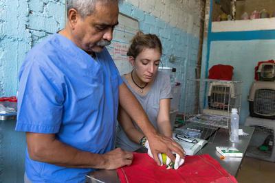 Als vrijwilliger kun je werken met dieren in het buitenland, bijvoorbeeld op het gebied van diergeneeskunde of dierenverzorging.