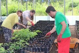 Help tijdens deze groepsreis voor jongeren bijvoorbeeld in de kwekerij van het Galapagos National park.