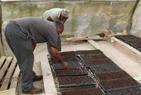 Vrijwilligerswerk in Jamaica: Landbouw