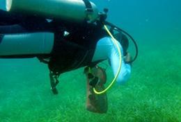Leer duiken in Belize en zet je in voor het behoud van koraalriffen in de oceanen.