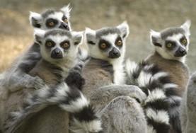 In het regenwoud van Madagaskar kom je de meest bijzondere dieren tegen als je vrijwilligerswerk doet op het natuurbehoud project.