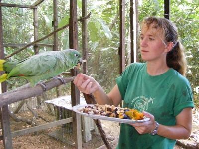Papegaaien verzorgen in Peru