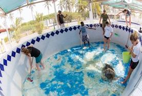 Help bij de bescherming van zeeschildpadden tijdens de groepsreis voor twintigers naar Mexico.