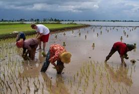 Maak kennis met de Khmer cultuur in Cambodja door bijvoorbeeld mee te helpen bij de dagelijkse werkzaamheden op het land.
